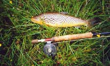 July mayflies will entice larger trout which rarely rise for the rest of the season.