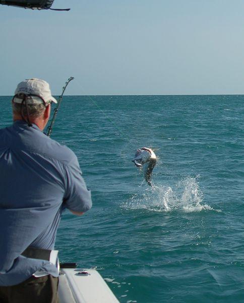 Marathon florida keys fishing report for Marathon key fishing charters