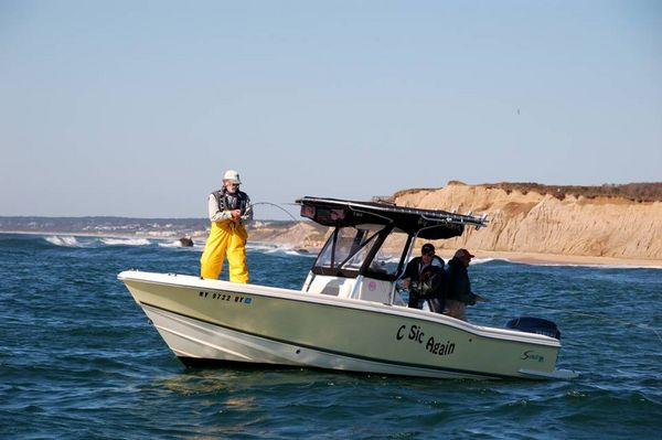 Fishing report for new york long island north shore for Fishing reports long island