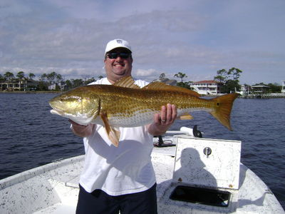 Pensacola bull red fish cyberangler photo gallery for Tides for fishing pensacola