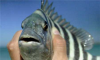 ponce_inlet_fishing_charters.png