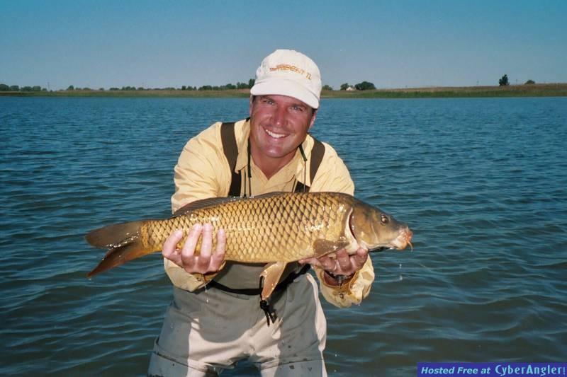 Freshwater 'Golden Bonefish' -carp