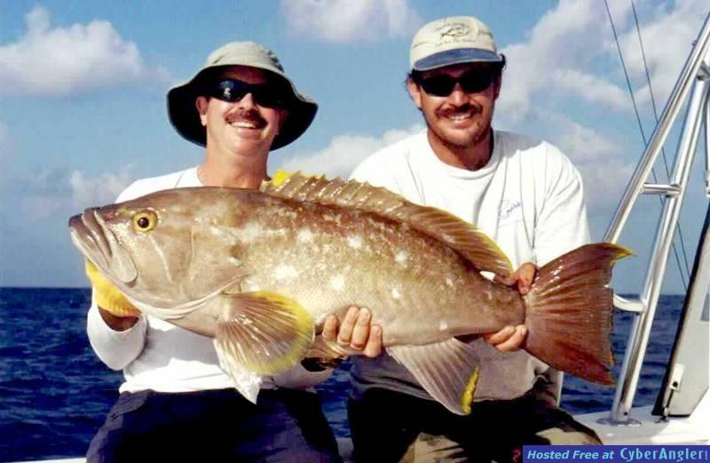 35# Yellow Edge Grouper