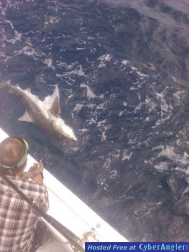 vince sailfish & Shark