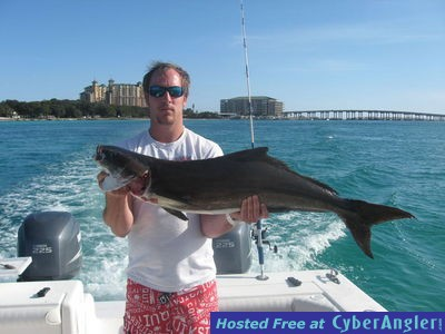 Cobia on reel talk for Destin florida fishing report