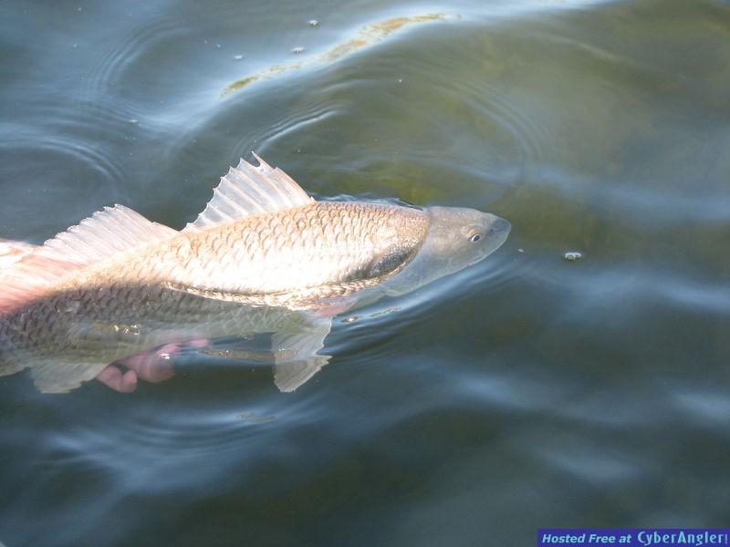fishing121208_007