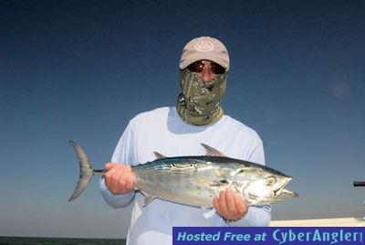 Good action in sarasota bay and coastal gulf for Tides 4 fishing sarasota