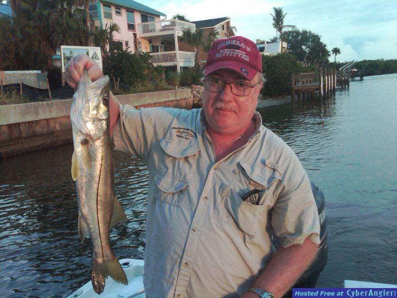 Largemouth Bass in Sarasota, Fl