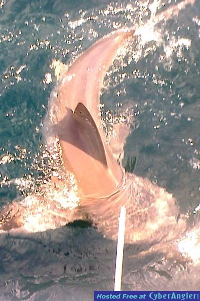 Shark in Trouble