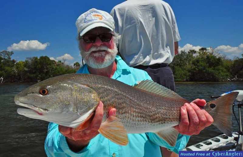 Charlotte Harbor Redfish