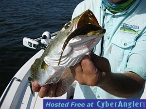 Two days of great fishing saltwater fishing academy for Is tomorrow a good fishing day