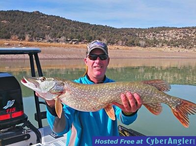 November trout pike fishing in colorado for Pike fishing colorado
