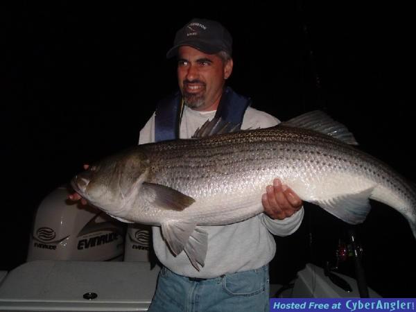 51 pound Striper