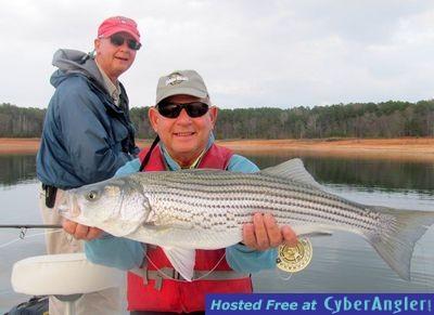 Despite warm water stripers feeding well for Lake hartwell striper fishing report