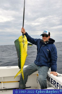 One slow day then a sailfish and dolphin bonanza for Stuart fishing charter