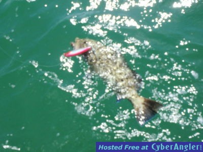 Wind rain and plenty of fish in biscayne bay for Plenty of fish florida