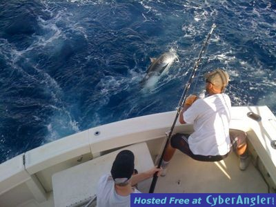 Tiger shark off ft lauderdale for Ft lauderdale fishing report
