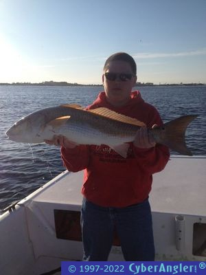 Fishing is good cobia run starting in panama city florida for Panama city fishing report