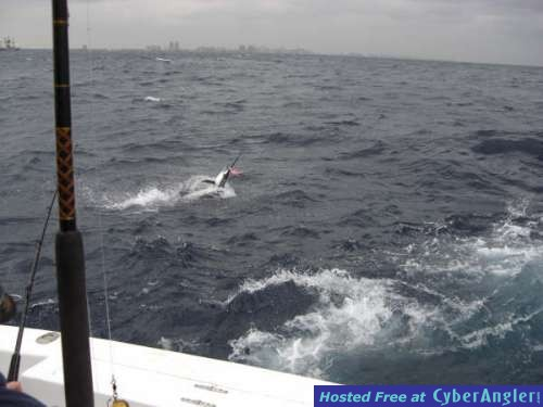 Nice Sailfish just hooked up