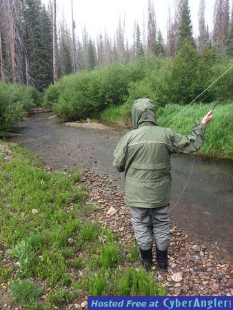 Summer fly fishing in pagosa springs co for Fishing colorado springs