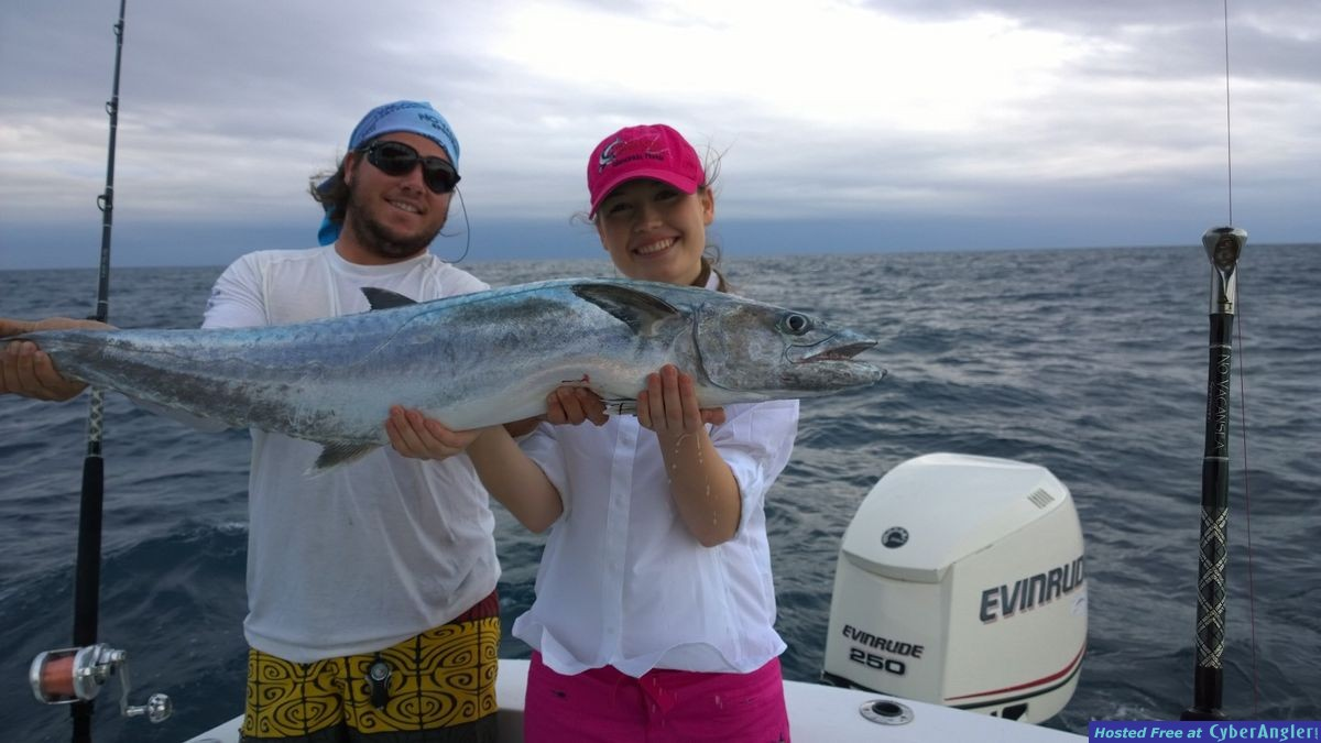 how to catch kingfish with live bait