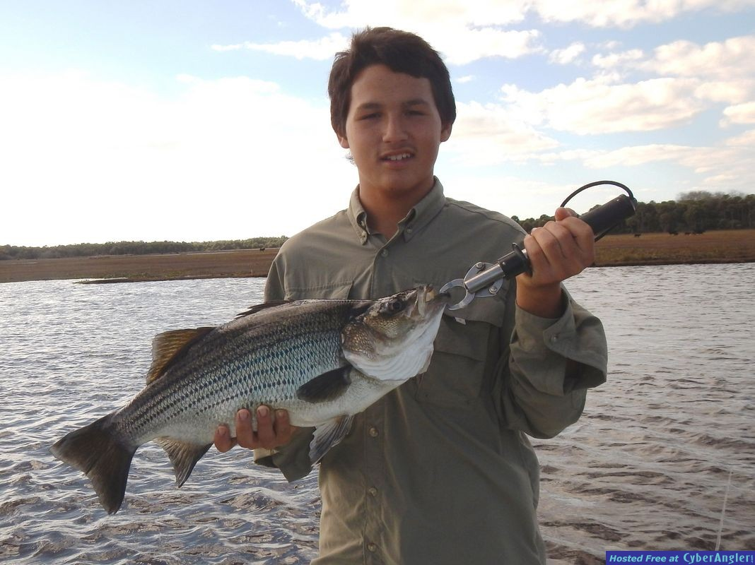 8-Pound_Striper_caught_on_the_St_Johns_River_02-01-2015