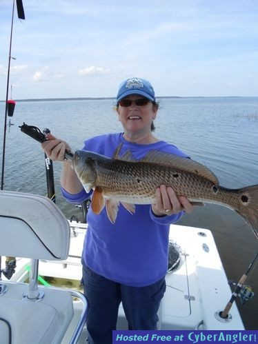 Great redfish bite in the lowcountry for Sc saltwater fishing report