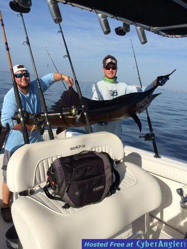 Sailfish kingfish and dolphin great summer action for Jupiter fishing report