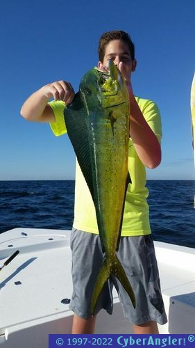 Light tackle mahi fishing in panama city beach fl for Panama city fl fishing report