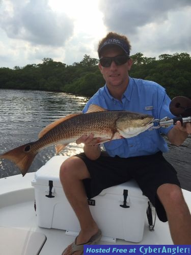 Redfish are schooling up in estero bay florida for Estero bay fishing report