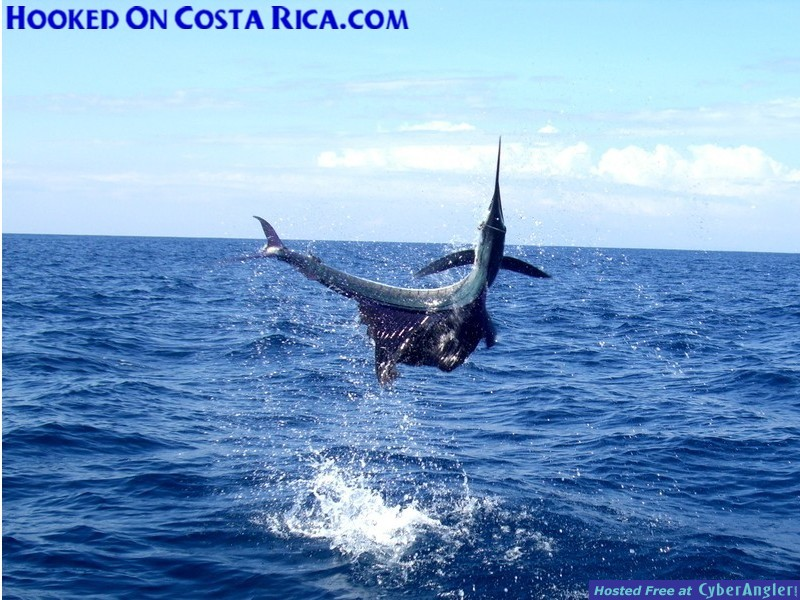 Costa Rica Sailfish has huge Air-Gasm
