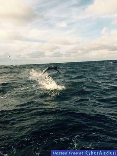 Sailfish are biting for Jupiter fishing report