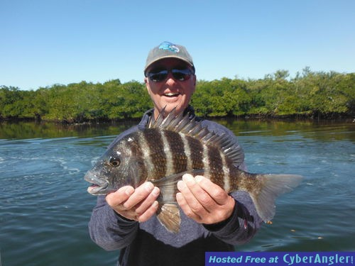 Sheepshead And Ladyfish Providing Good Action In Sarasota