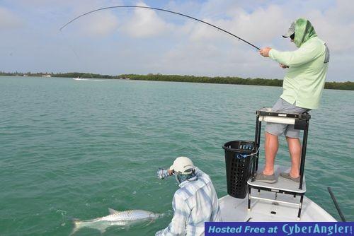 Tarpon season open dates last week of may for Florida fishing seasons