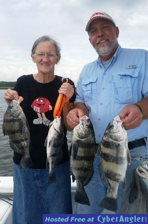 Black drum biting in southport nc for Nc fishing report