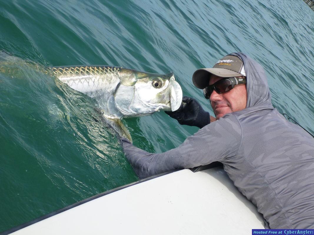 Tampa tarpon fishing