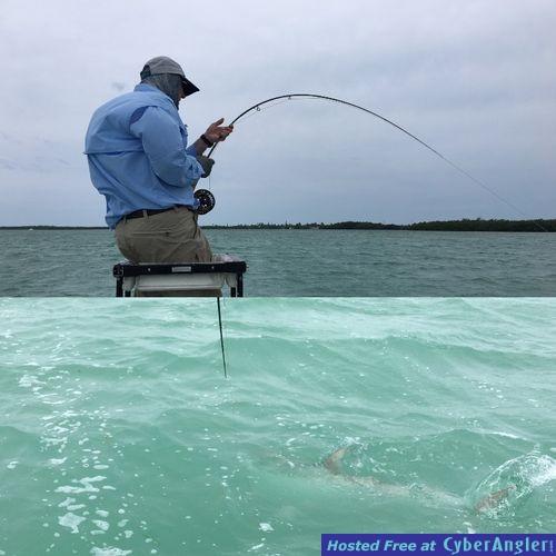 Tarpon season open dates last week of may for Key west fly fishing