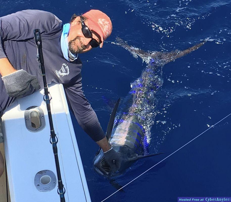 sea horse blue marlin