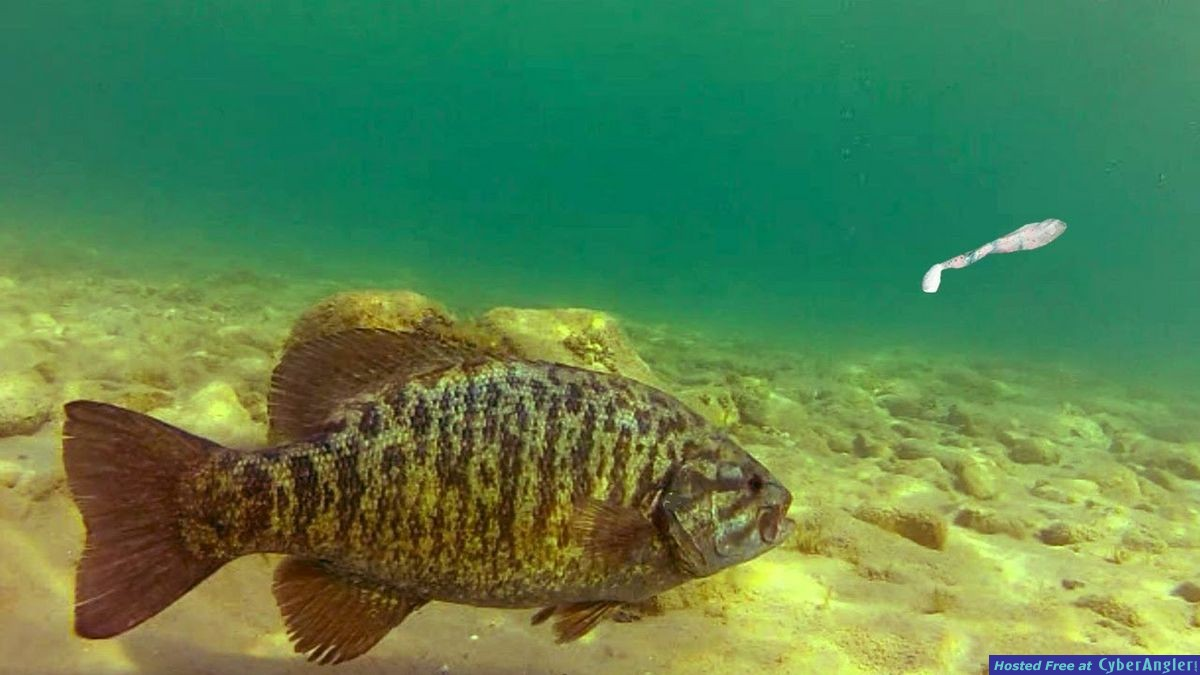 Swim Baits For Big Smallmouth!