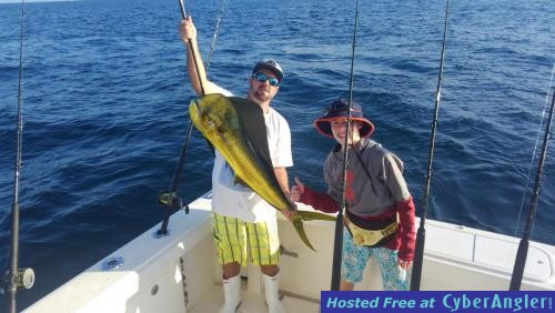 Dolphin kingfish and sails for Stuart fl fishing report