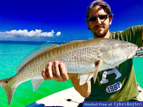 Bait is everywhere for Best florida fish to eat