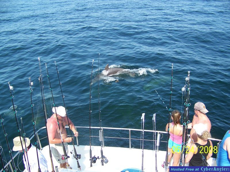 Dolphins Helping Fish