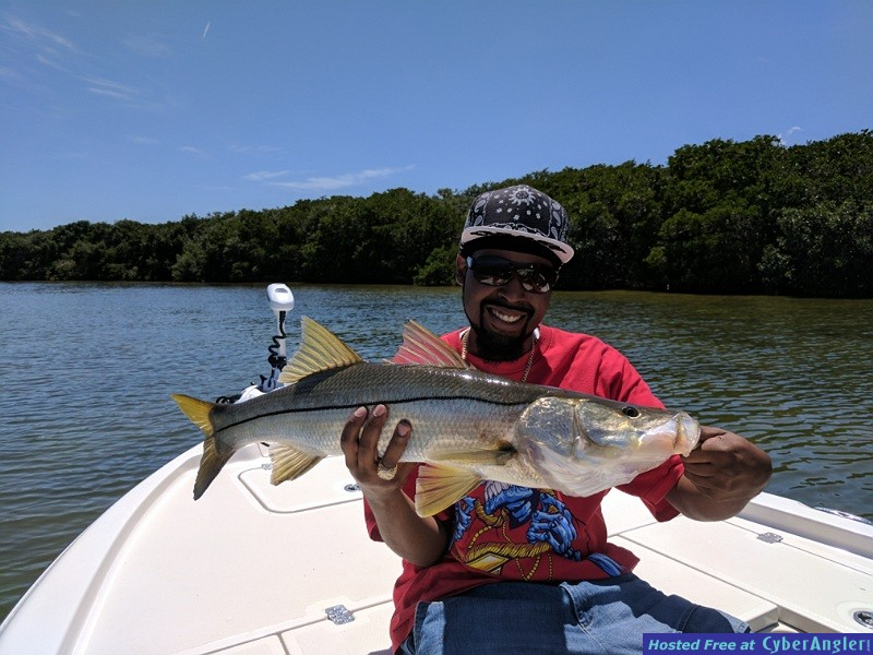 "31"" Snook"
