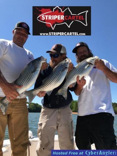 Lake lanier striped bass fishing reports striper cartel for Striped bass fishing reports