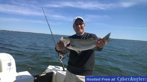More stripers arriving daily for Ct saltwater fishing license