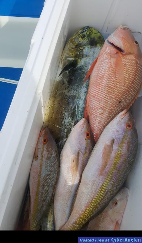 irmafish_www_floridakeysfishin_com