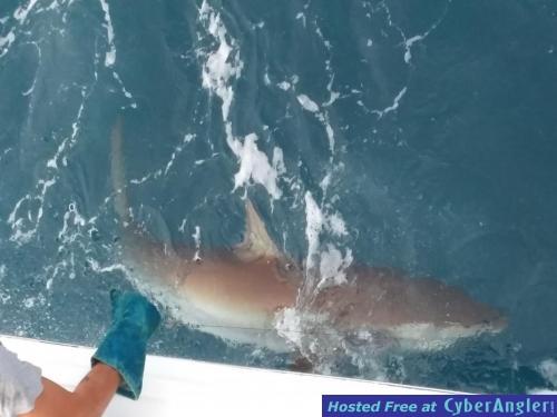 Charter fishing fort lauderdale deep sea shark for Deep sea fishing fort lauderdale