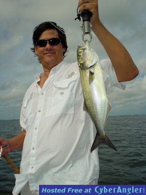 David Sugar's Sarasota Bay CAL jig bluefish