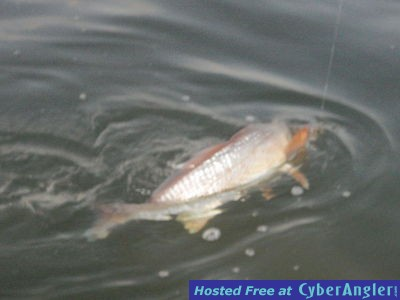 Tampa wade fishing hot spot for gi 39 s for Tampa bay fishing hot spots