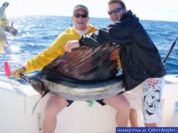 Hot Sailfish Action